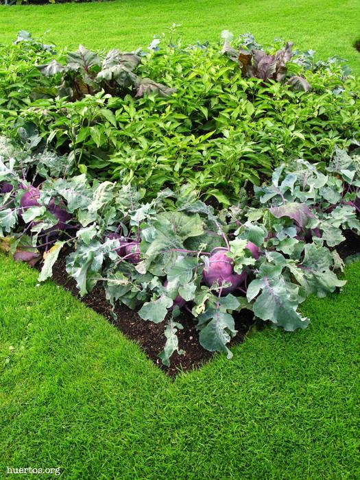 huertos.org - Hortalizas en jardinería