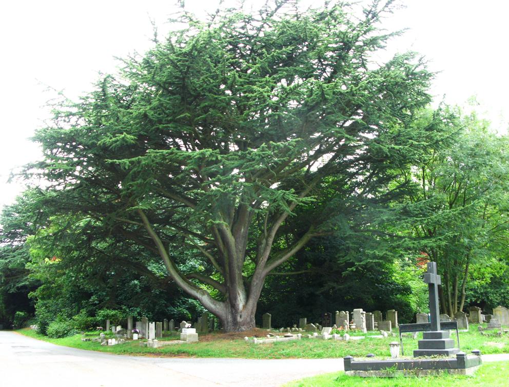 Botanica funeraria 2