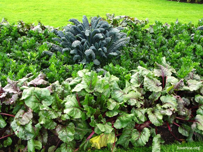 huertos.org - Hortalizas en jardinería 2